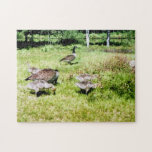 Family of Geese Puzzles