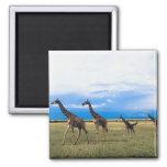 Family of Giraffes Magnets