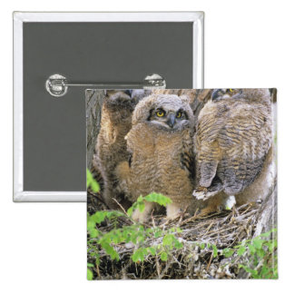 Family of Great Horned Owlets (Bubo virginianus) Button