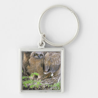 Family of Great Horned Owlets (Bubo virginianus) Keychain