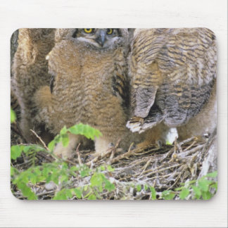 Family of Great Horned Owlets (Bubo virginianus) Mouse Pad