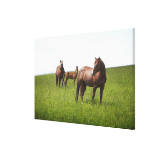Family of horse in field canvas print