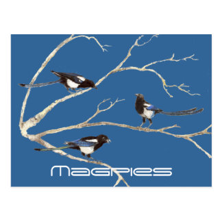 Family of Magpies, Birds, Nature, Wildlife Postcards