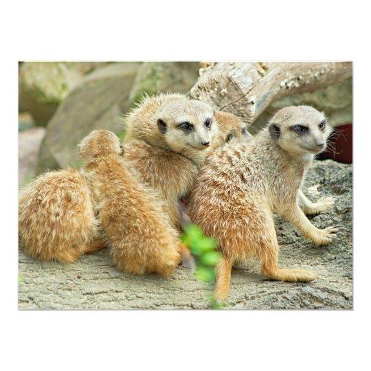 Family of Meerkats - invitation