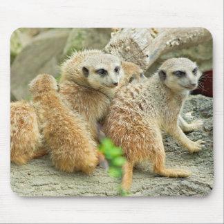 Family of meerkats - Mousepad