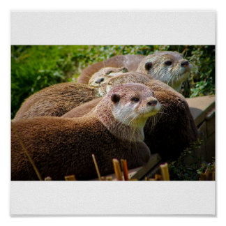 Family of otters poster