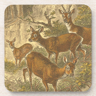 Family of Roe - Deers in a Forest Beverage Coaster