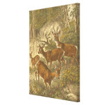 Family of Roe - Deers in a Forest Canvas Print