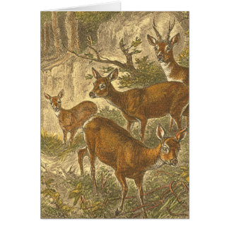 Family of Roe - Deers in a Forest Card