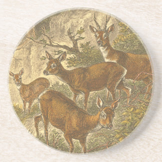 Family of Roe - Deers in a Forest Coaster