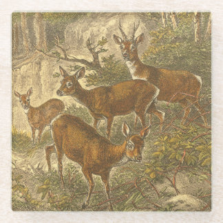 Family of Roe - Deers in a Forest Glass Coaster