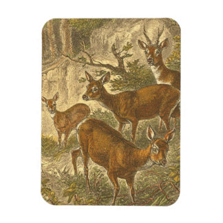 Family of Roe - Deers in a Forest Magnet