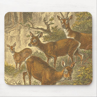 Family of Roe - Deers in a Forest Mouse Pad