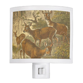 Family of Roe - Deers in a Forest Night Light