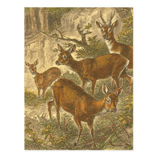 Family of Roe - Deers in a Forest Postcard