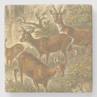 Family of Roe - Deers in a Forest Stone Coaster