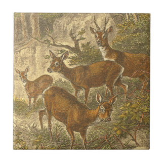 Family of Roe - Deers in a Forest Tile