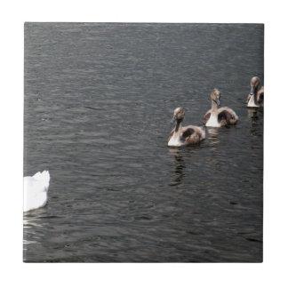 Family of Swans Ceramic Tile