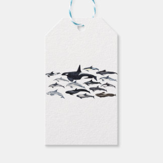 Family of the dolphins: orcas, dolphins, marsopas gift tags