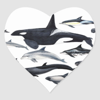Family of the dolphins: orcas, dolphins, marsopas heart sticker
