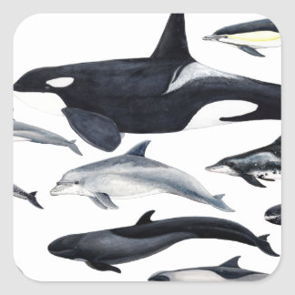 Family of the dolphins: orcas, dolphins, marsopas square sticker