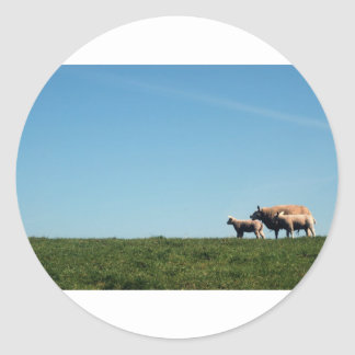 Family or sheep on a dike classic round sticker