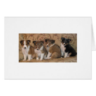 Family Portrait Of Billie Wee's Pups Card