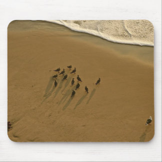 FAMILY REUNION OF SORTS AT THE BEACH MOUSE PAD