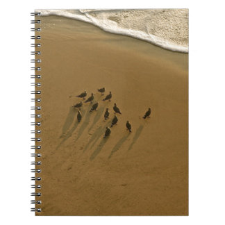 FAMILY REUNION OF SORTS AT THE BEACH JOURNAL