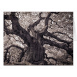 Family Tree Nature's Old Mighty Wisdom Large Greeting Card