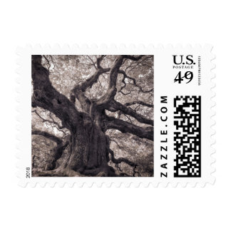 Family Tree Nature's Old Mighty Wisdom Postage