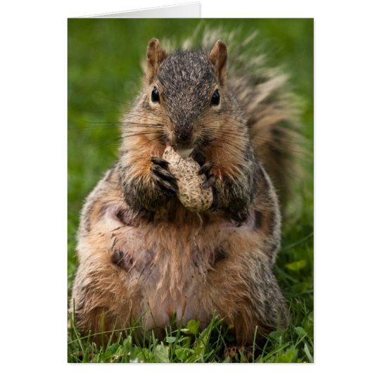 Famished Fox Squirrel Card