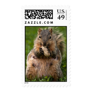 Famished Fox Squirrel Postage Stamp