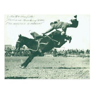 Famous Bucking Bronc Five Minutes Postcard