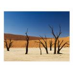 famous Deadvlei with dead trees, desert 3 Postcard