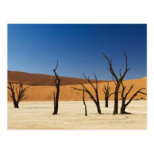 famous Deadvlei with dead trees, desert 3 Postcards