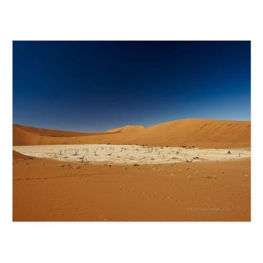 famous Deadvlei with dead trees, desert Postcard