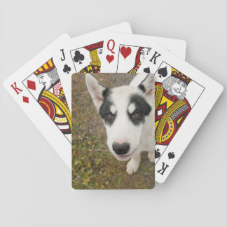 Famous Greenlandic sled dog, black and white puppy Poker Deck