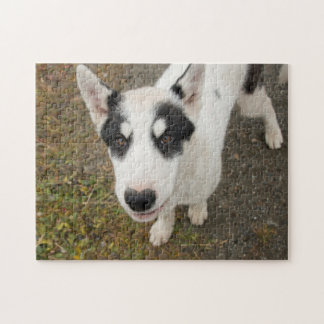 Famous Greenlandic sled dog, black and white puppy Puzzle