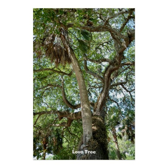 Famous Love Tree St Augustine Fl Poster Zazzle Com