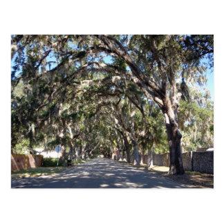 famous magnolia avenue st augustine florida usa postcard