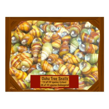 Hawaiian Themed Famous Oahu Tree Snails are going extinct unless - Postcard