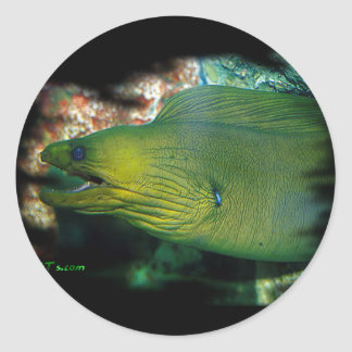 Famouse Green Moray Eel Classic Round Sticker