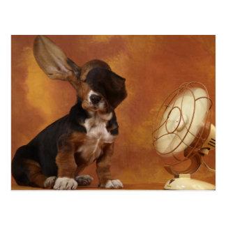Fan Blowing A Basset Hound's Ears Postcard