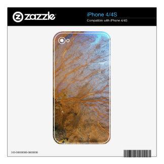 Fan de mar gorgonian gigante (SP de Plexauridae.) Calcomanías Para El iPhone 4S