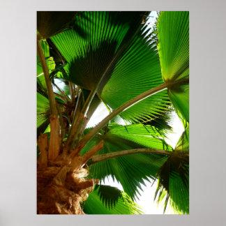 Fan Palm Print