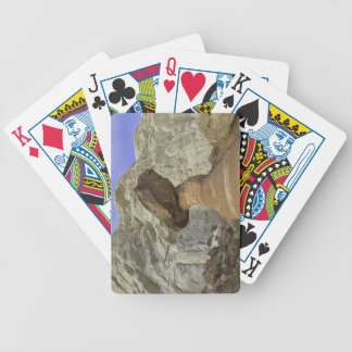 Fanciful toadstool shape of eroded red and white bicycle playing cards