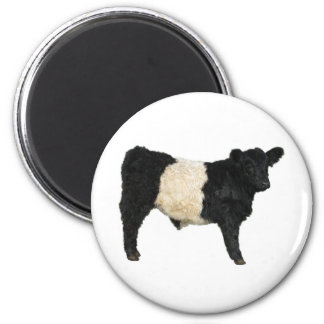 Fancy an Oreo? Belted Galloway Cow 2 Inch Round Magnet