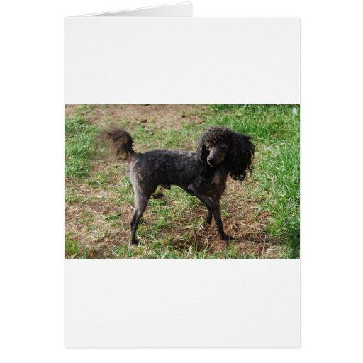 Fancy Black Prancing Poodle Cards