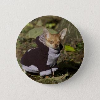 Fancy Chihuahua Button